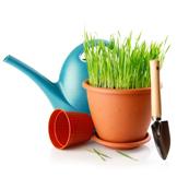 Planter & havepleje
